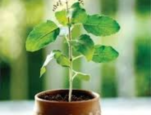 Going Green with Tulsi: The Water Plant.